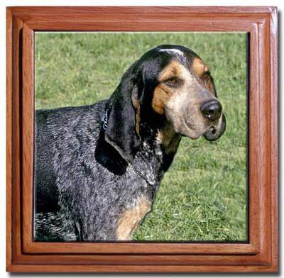 Dogs, watch dog or home protection?-kgrhqrhjcye-ebnu-0ibp2jdqjczq-60_1.jpg