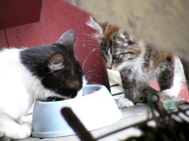 Critter pics / Pet Thread: Dial Up Beware-kittens-09-04-05-026.jpg