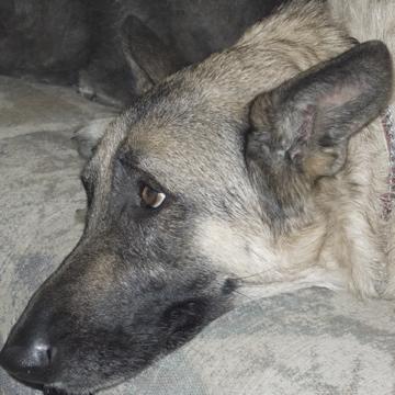 Critter pics / Pet Thread: Dial Up Beware-l1000218.jpg