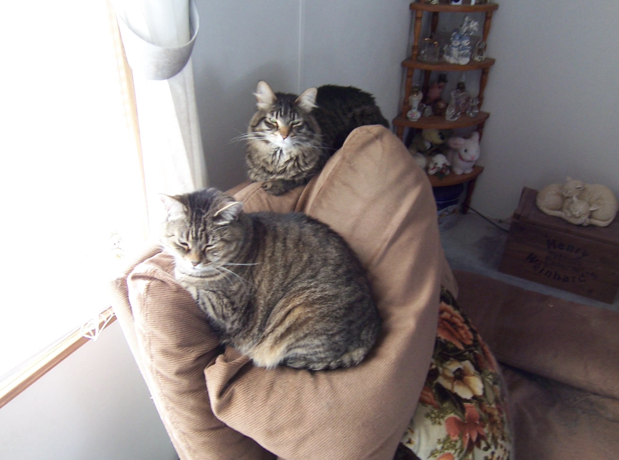 Let's see a picture of the cat that guards your house-lizzie-maggie.jpg