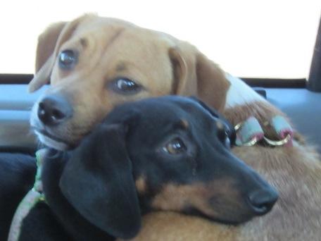 Critter pics / Pet Thread: Dial Up Beware-maggie-sophie.jpg