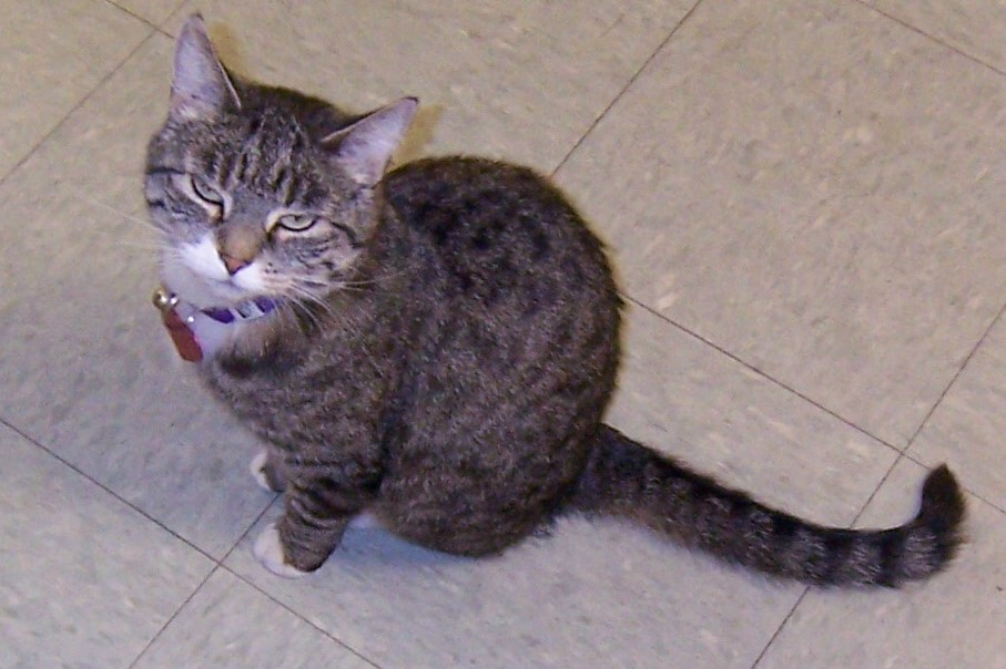 Let's see a picture of the cat that guards your house-matilda.jpg