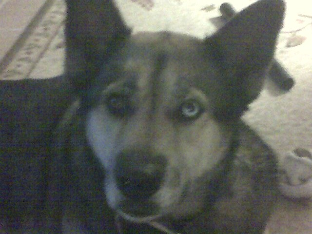 Critter pics / Pet Thread: Dial Up Beware-momspics014.jpg