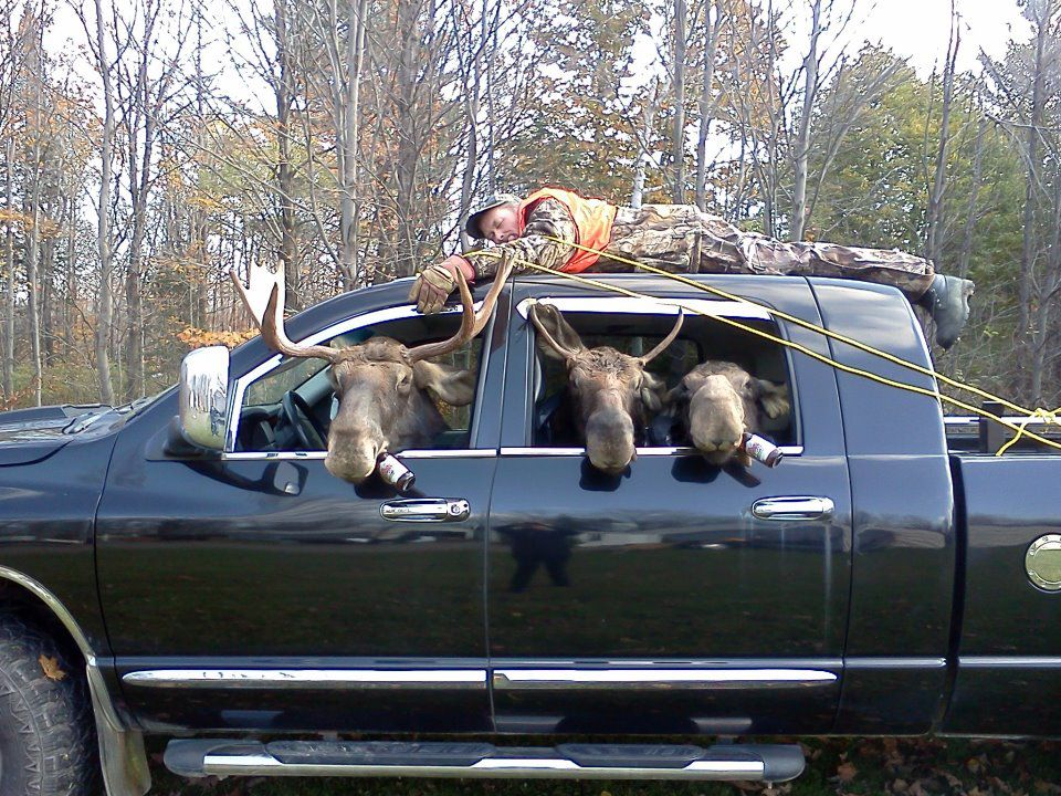 Moose Hunters-moose.jpg