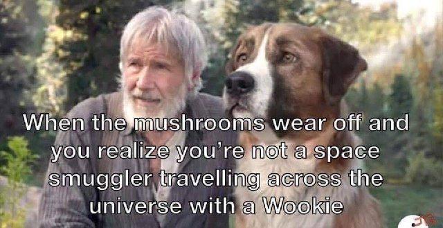 Joke/Meme Thread Pt 2-mushrooms.jpg
