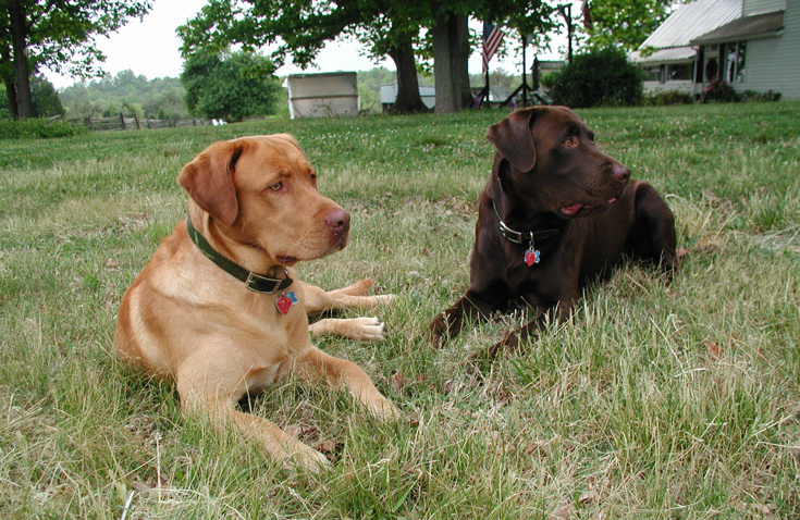 Let's see a picture of the dog that guards your family.-mutts.jpg