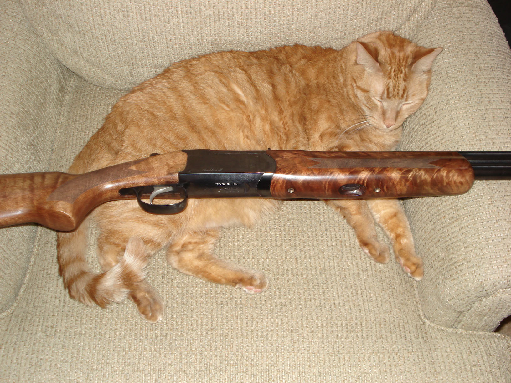 Stoeger Outback-outbackandcat.jpg