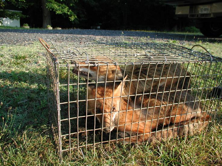 Critter pics / Pet Thread: Dial Up Beware-p1010156-3-.jpg