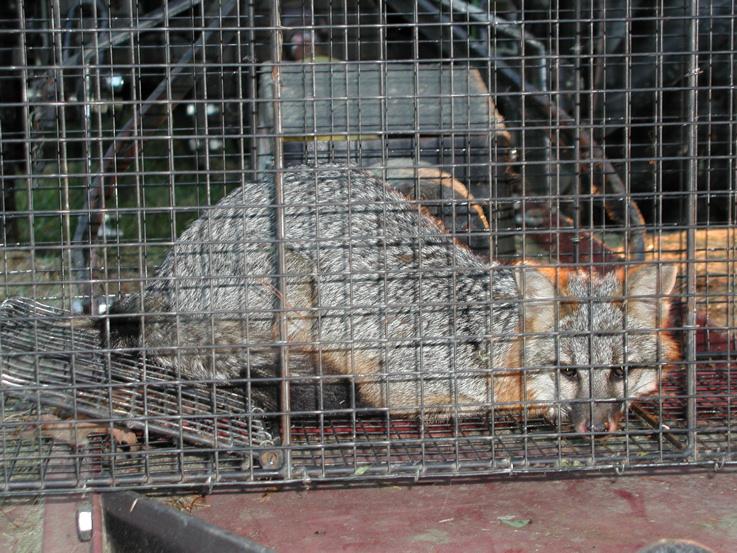 Critter pics / Pet Thread: Dial Up Beware-p5230106-3-.jpg