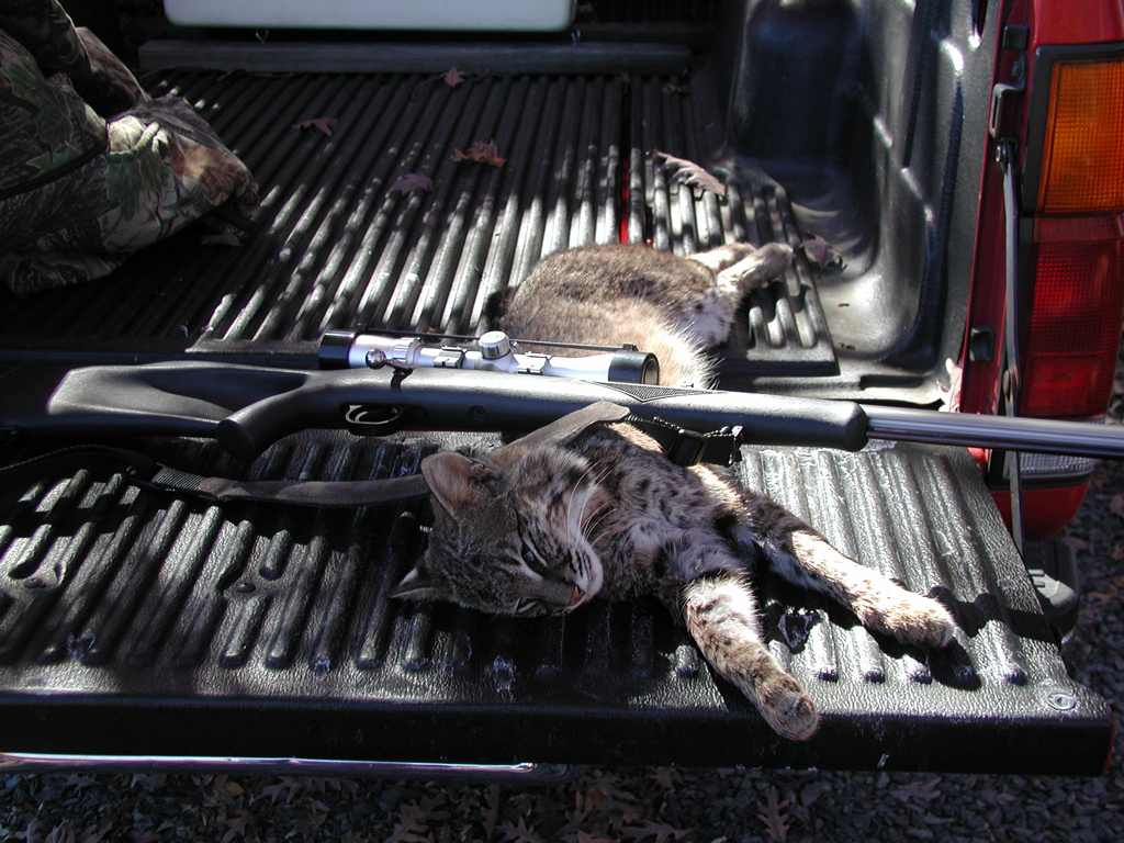 Critter pics / Pet Thread: Dial Up Beware-pb060133-2-.jpg