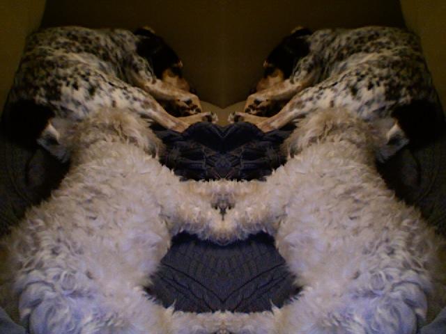 Critter pics / Pet Thread: Dial Up Beware-photo-36.jpg