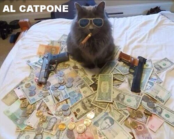 Has anyone seen this cat?  Might be wanted by several Federal Agencies..........-picdump-930-20.jpg