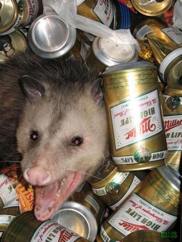 Another Critter Post-possum_small.jpg