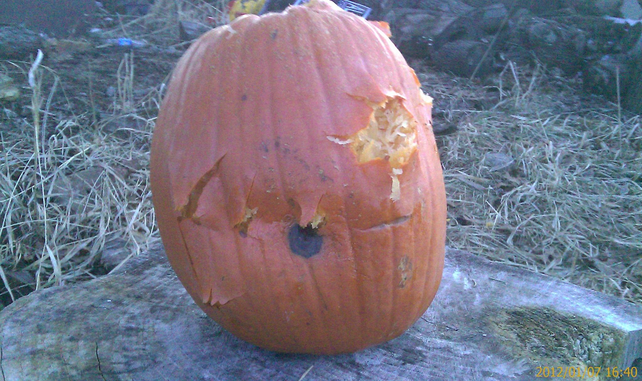 Wisconsin CCW Permit Time...Keep us posted!-pumpkin-meet-hallow-point-2.jpg