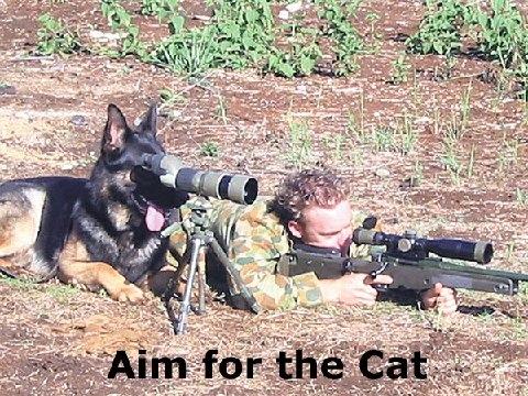 A real hunting dog-realhuntingdog.jpg