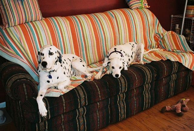 Let's see a picture of the dog that guards your family.-rsr-pic.jpg