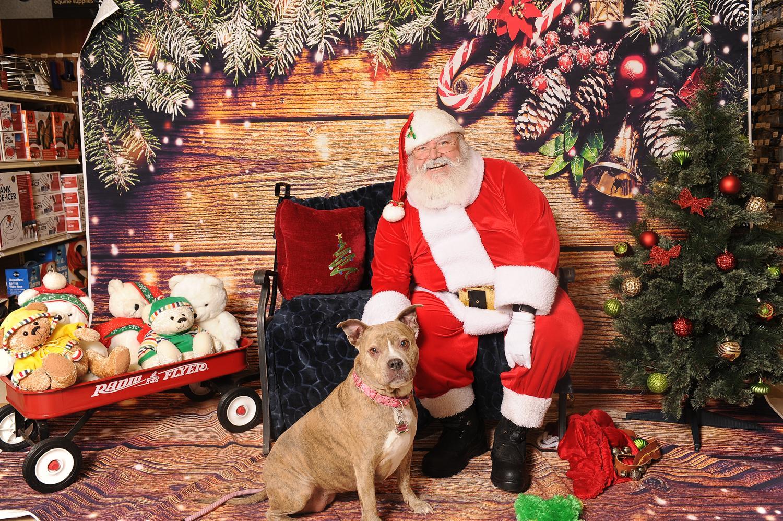 Merry Christmas-santa2019.png