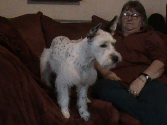 Dogs, watch dog or home protection?-sasha-groomers.jpg
