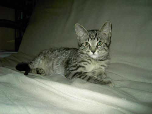 Critter pics / Pet Thread: Dial Up Beware-satchel.jpg