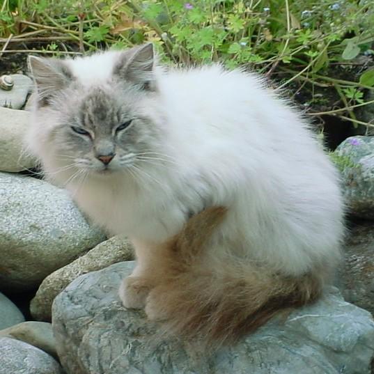 Critter pics / Pet Thread: Dial Up Beware-scruffy1y.jpg