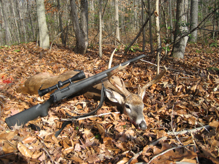 So Pennsylvania....-seven-pointer-003-2-.jpg