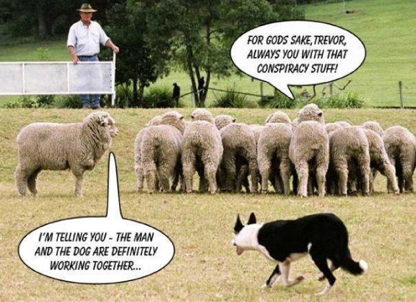 So, Think YOU Have an Opinion?-sheepdog.jpg