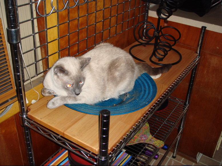 Critter pics / Pet Thread: Dial Up Beware-small-dsc00190.jpg