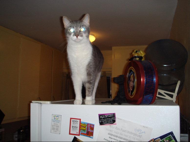 Critter pics / Pet Thread: Dial Up Beware-small-dsc00262.jpg