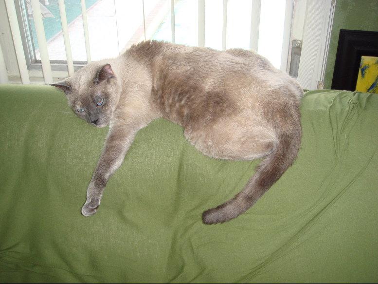 Critter pics / Pet Thread: Dial Up Beware-small-dsc00273.jpg
