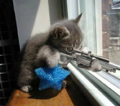 Funny gun related picture thread...-sniper_cat-12474.jpg