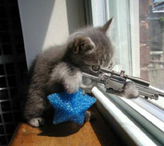 Let's see a picture of the cat that guards your house-sniper_kitten.jpg