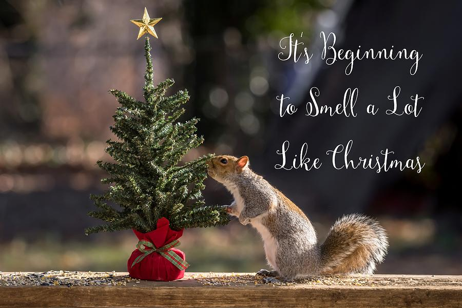 Merry Christmas-squirrel-smells-like-christmas-terry-deluco.jpg