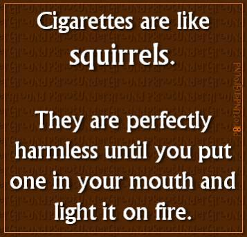 Random Thoughts-squirrels.jpg