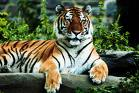 Let's see a picture of the cat that guards your house-tiger.jpg