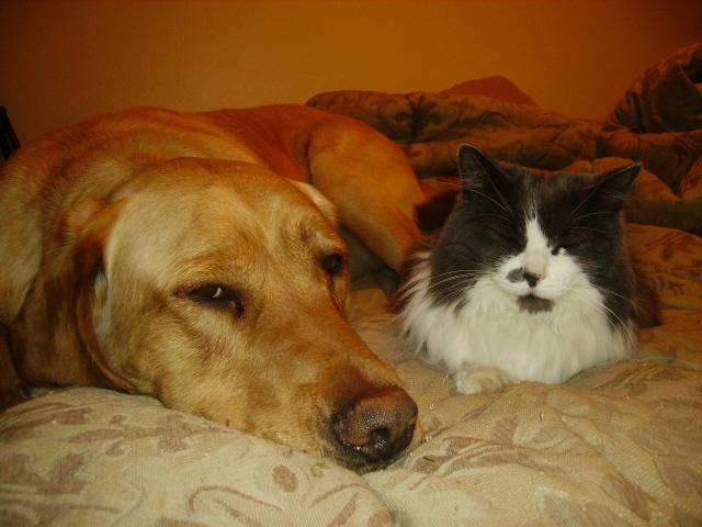 Critter pics / Pet Thread: Dial Up Beware-tigmoo.jpg