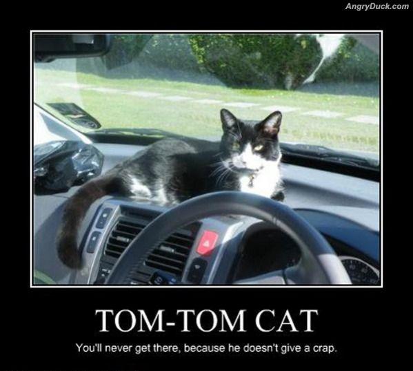 A purrfectly fun thread-tom_tom_cat.jpg