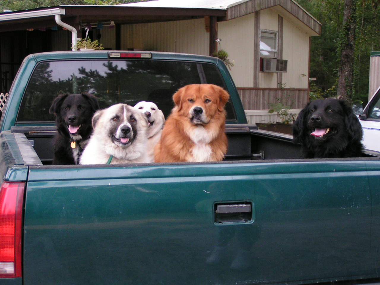 Consider a four footed furry thing as your first warning system-truck4.jpg