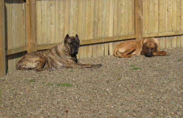 Mans Best Friend, Best Defense...-tursa-pierce-7-10-09.jpg