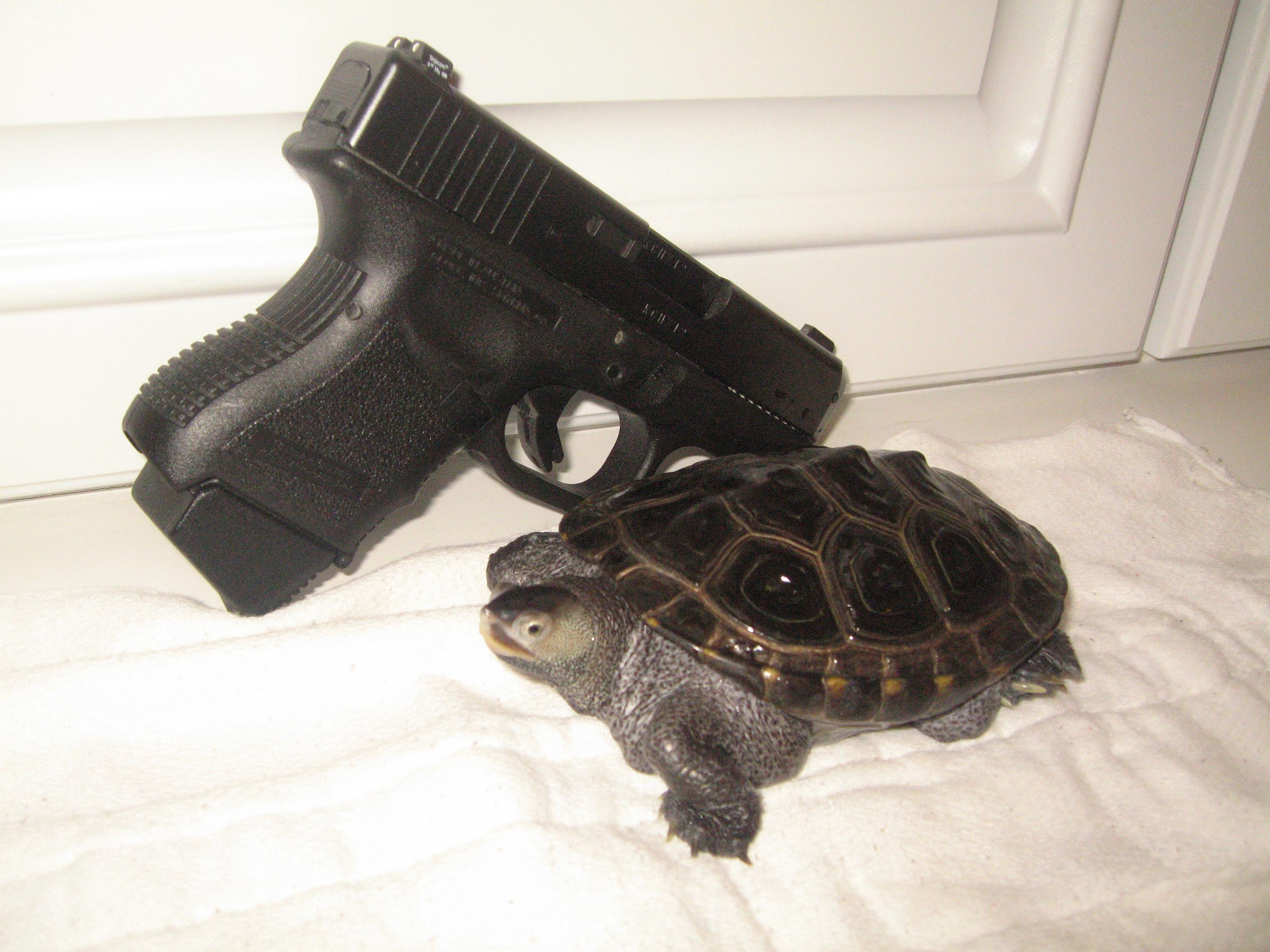Let's see pics of the Turtle that guards your front door...-turtle-012.jpg