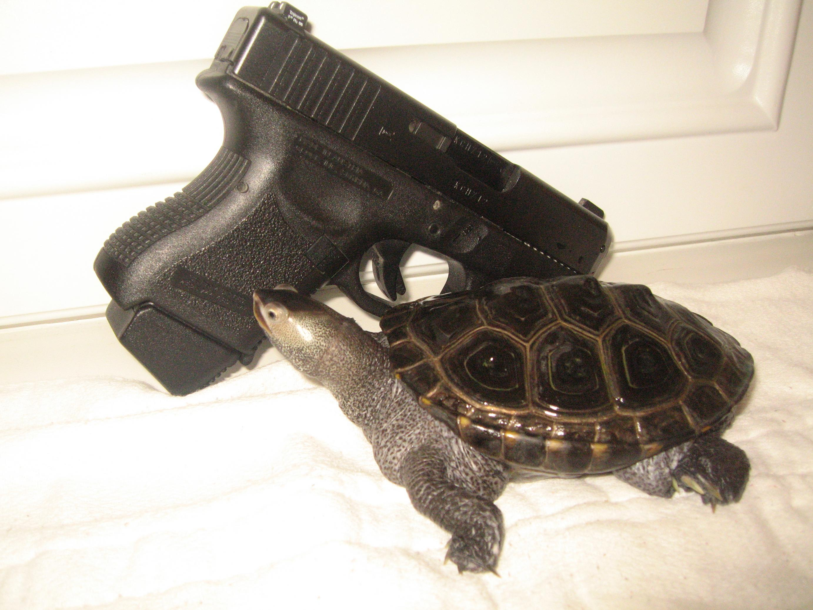 Let's see pics of the Turtle that guards your front door...-turtle-014.jpg