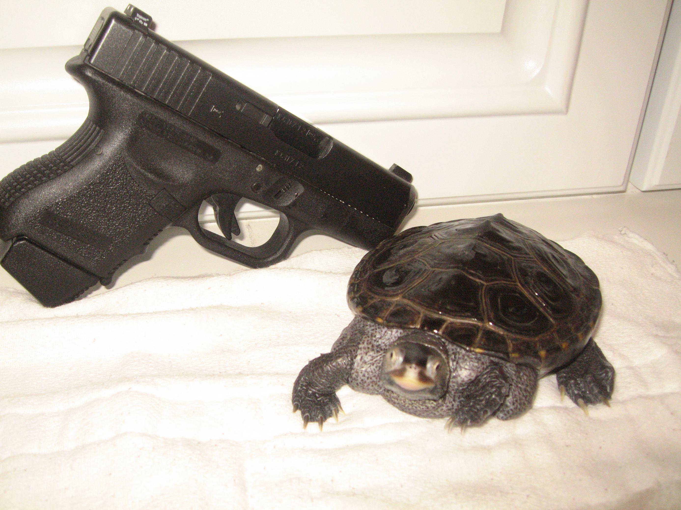 Let's see pics of the Turtle that guards your front door...-turtle-015.jpg