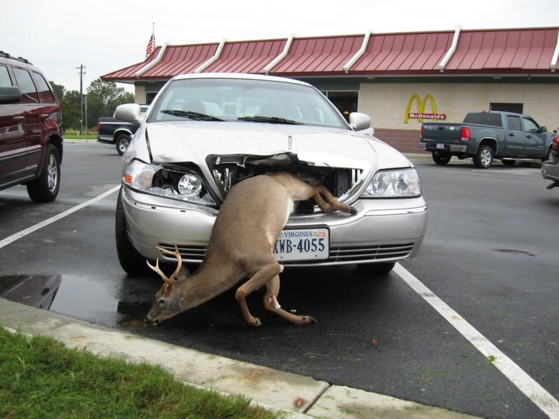 Montana -  'you kill it, you grill it' law.   Yummy in my Tummy!-unknown-1.jpg