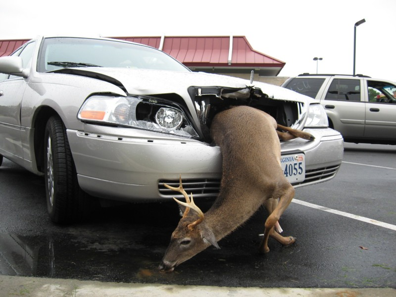 Montana -  'you kill it, you grill it' law.   Yummy in my Tummy!-unknown-3.jpg