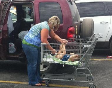 Name:  WalmartCart.png Views: 32 Size:  270.1 KB