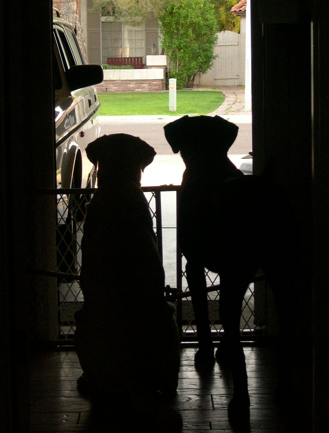 My 4-legged pal lost his battle with cancer - the quiet is deafening-watching.jpg