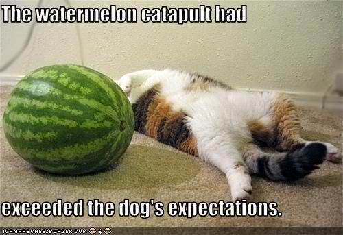 Dog wars-watermelon.jpg
