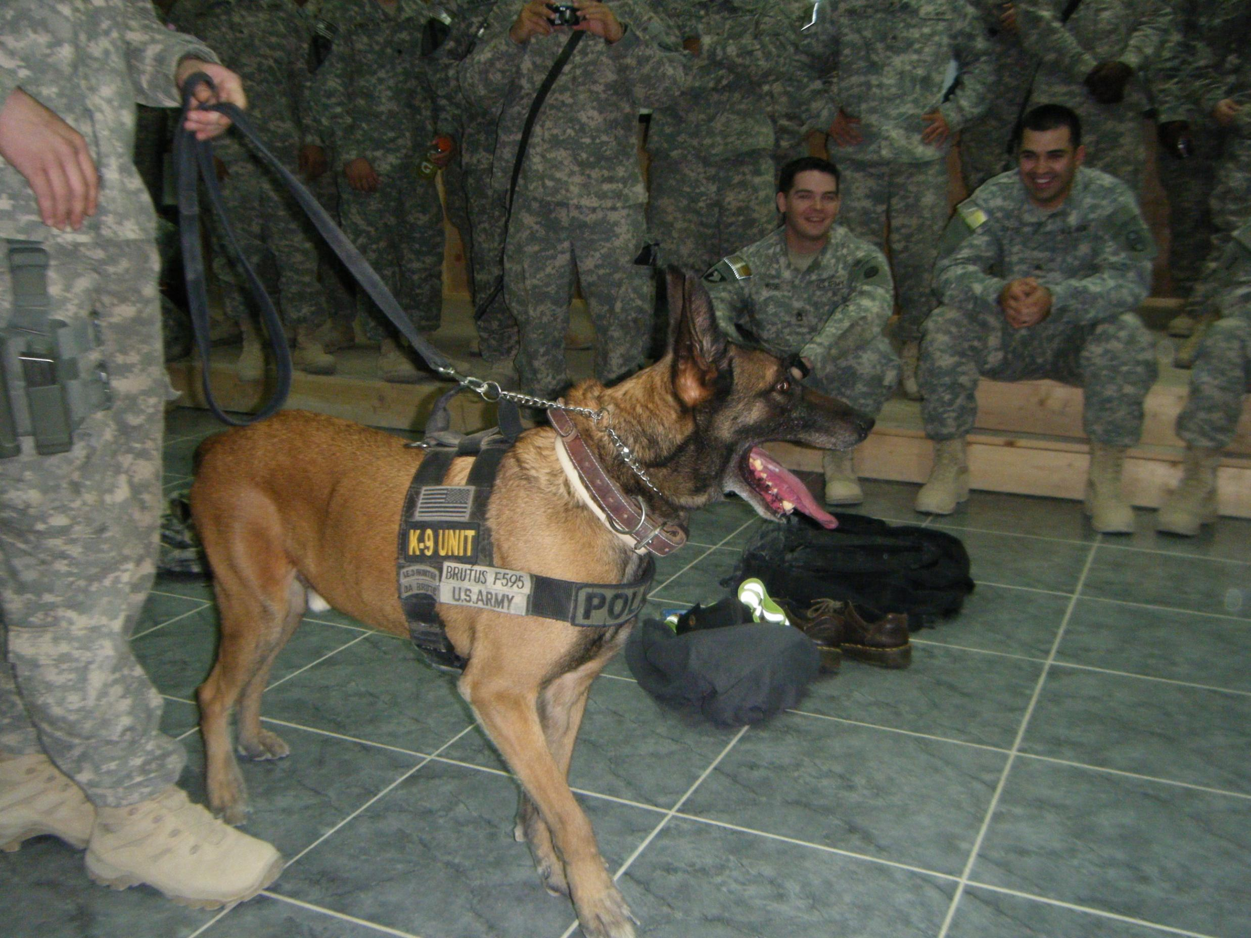 Drug and Bomb Dogs Tomorrow-working-dogs-010.jpg