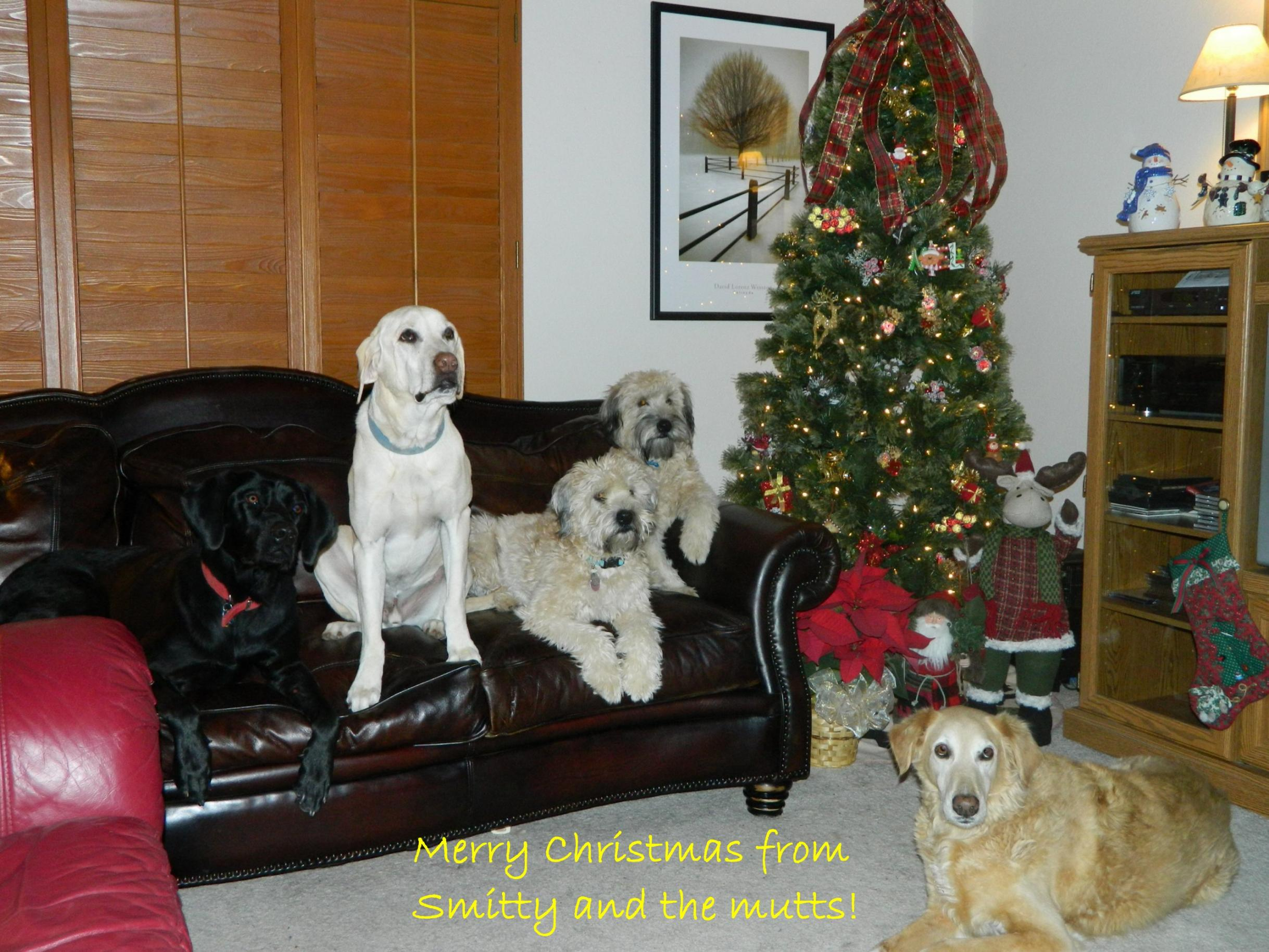 Christmas Greetings and Peace to All!-xmas-mutts.jpg